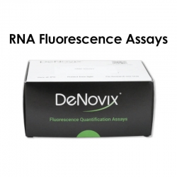 RNA Fluorescence Assay